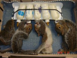 squirrel_rack.jpg